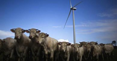 Ветроэнергетике Европы надуло рекордные инвестиции