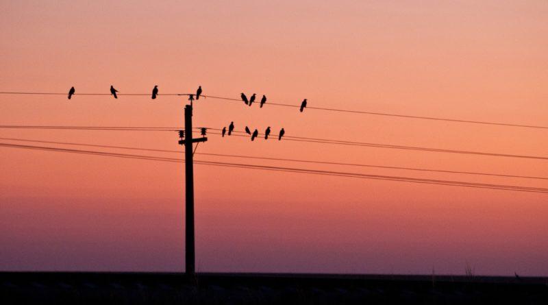 ФСК ЕЭС установит на ЛЭП Сибири 41 тыс. устройств, защищающих птиц от поражения током
