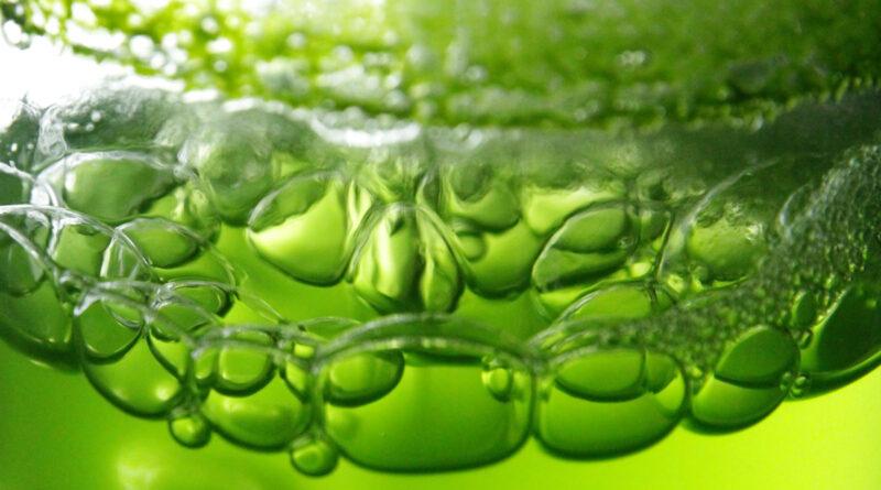 Повышение эффективности и снижение затрат при производстве микроводорослей с отходами биодизеля